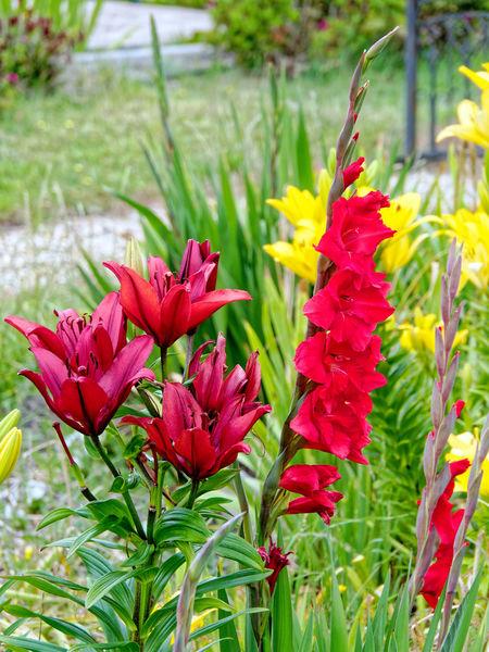 Lilies-3.jpeg