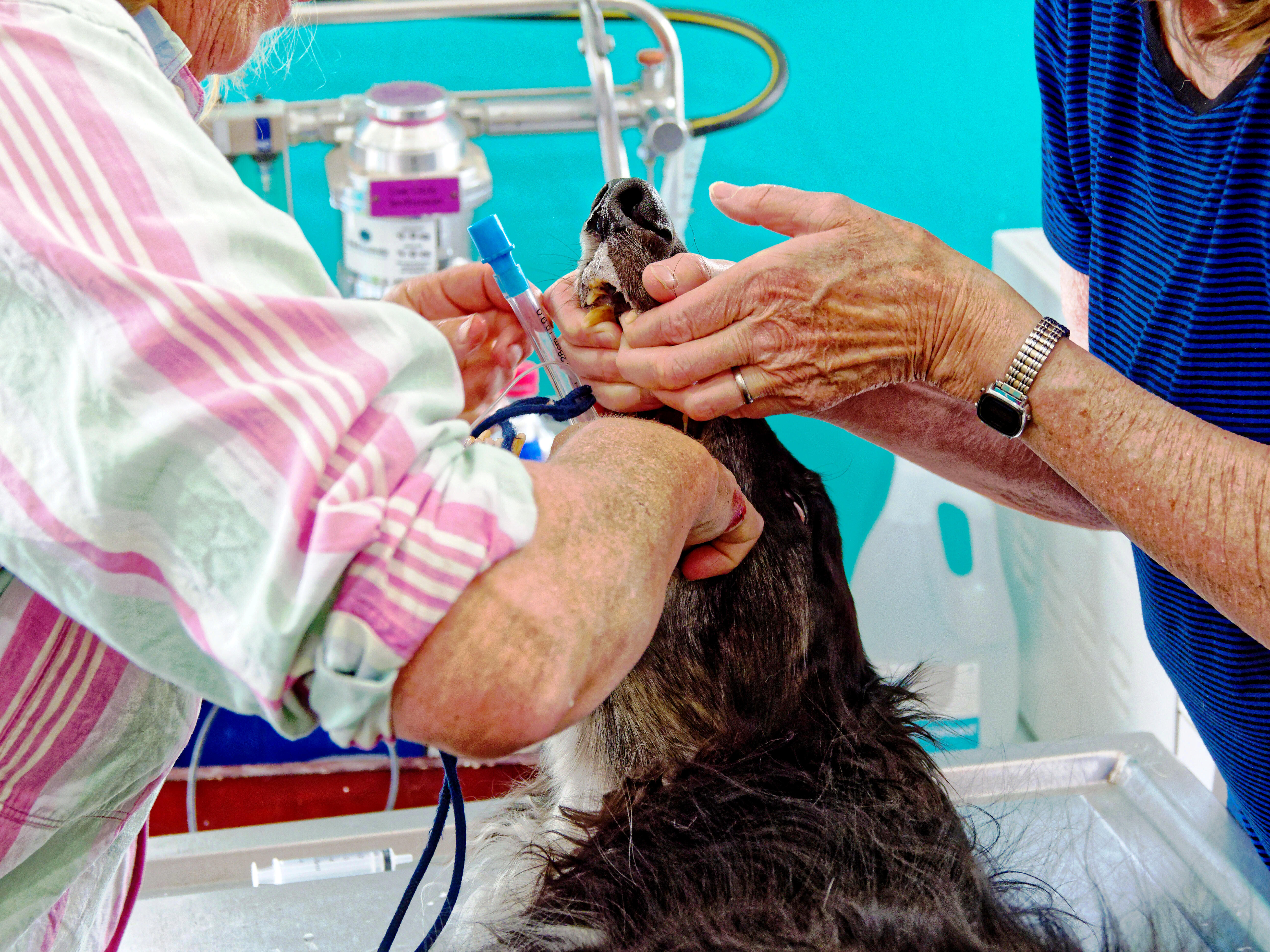 Leonid-biopsy-7.jpeg