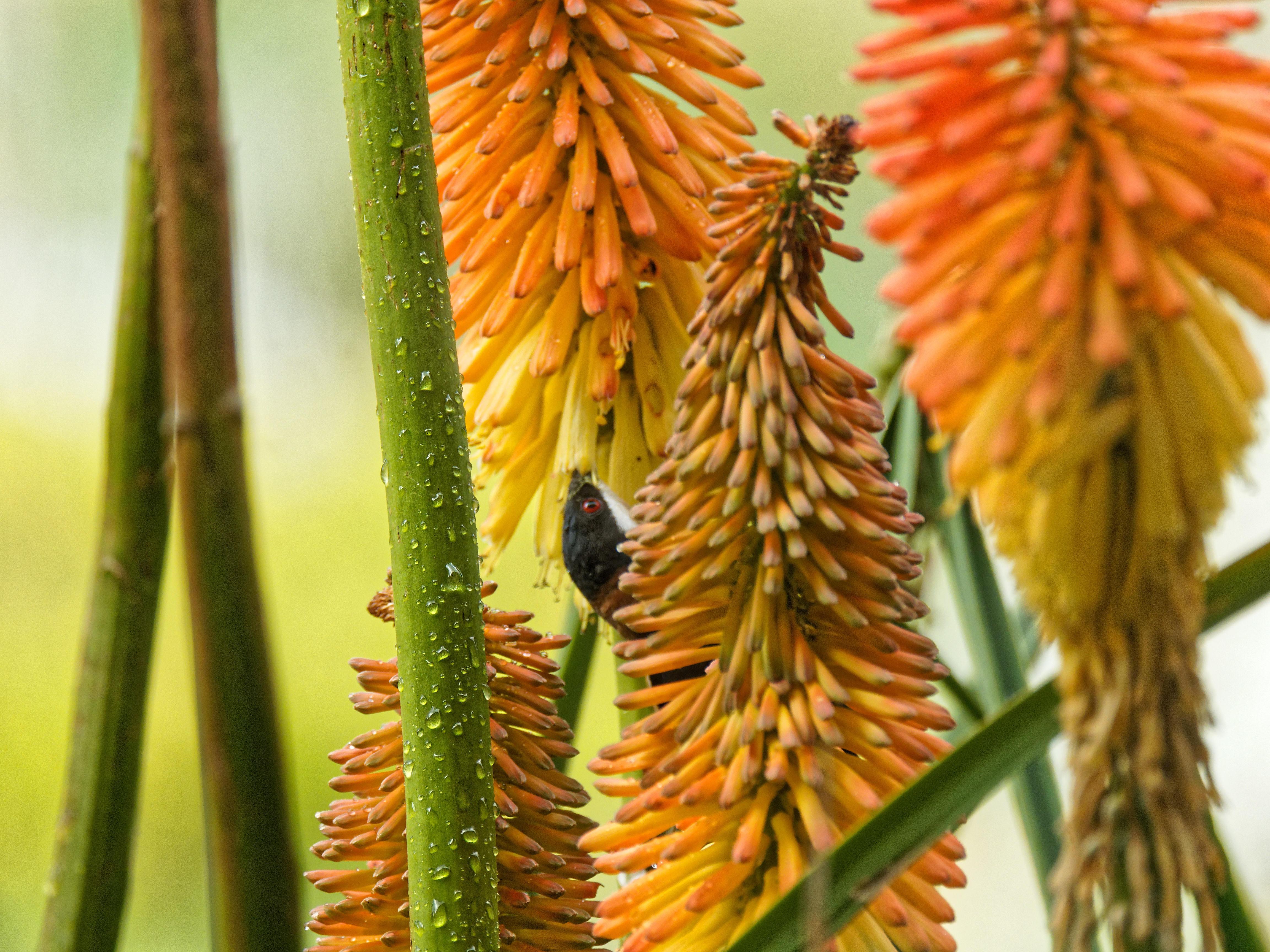Honeyeater-1.jpeg