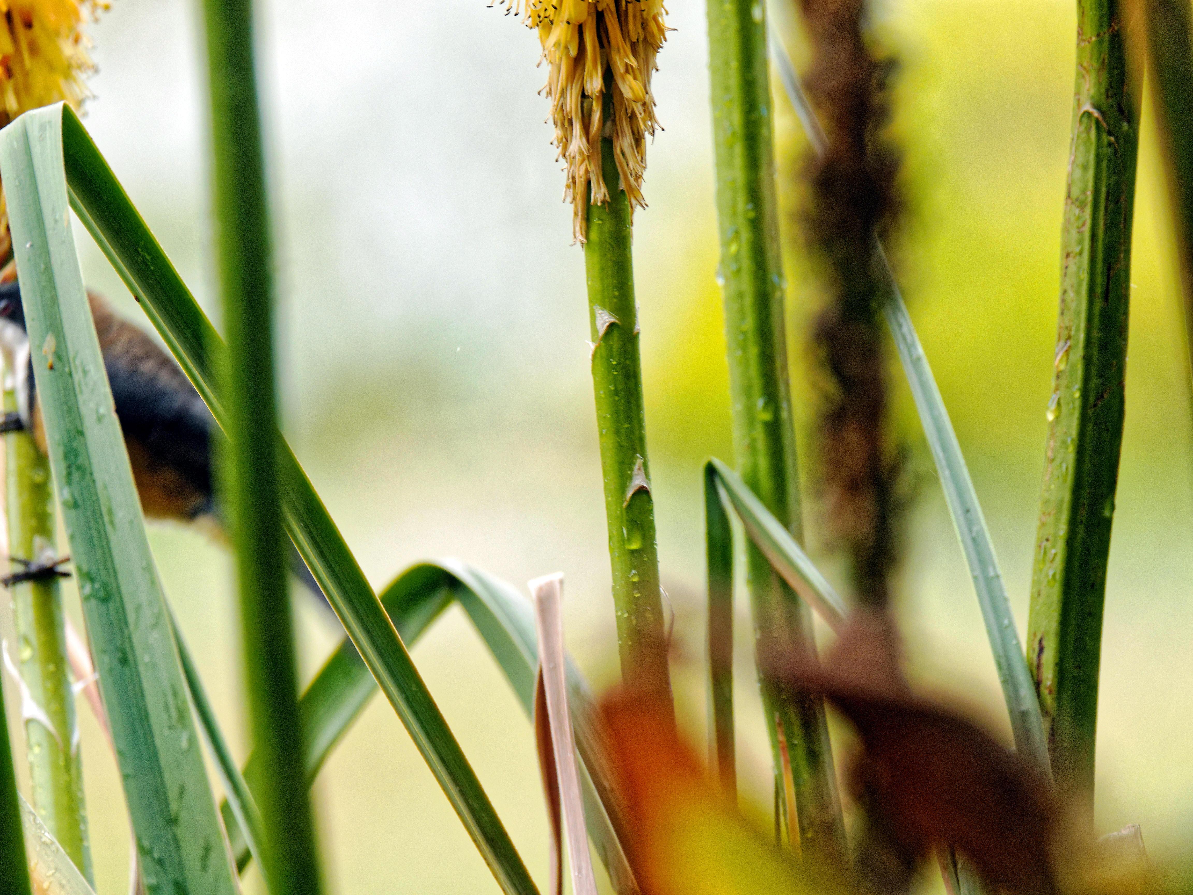 Honeyeater-22.jpeg