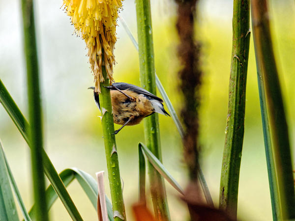 Honeyeater-10.jpeg