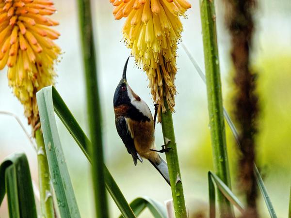 Honeyeater-15.jpeg