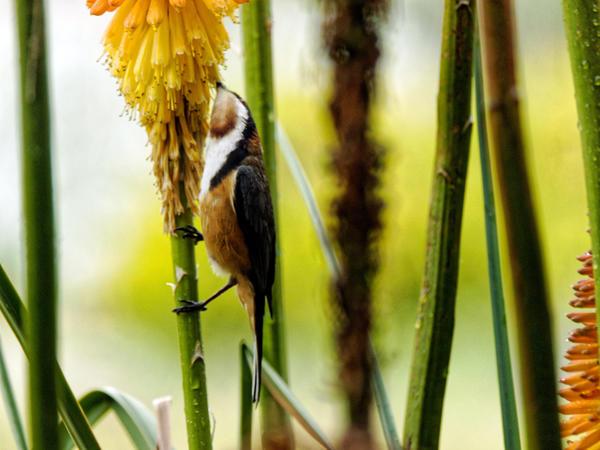Honeyeater-6.jpeg