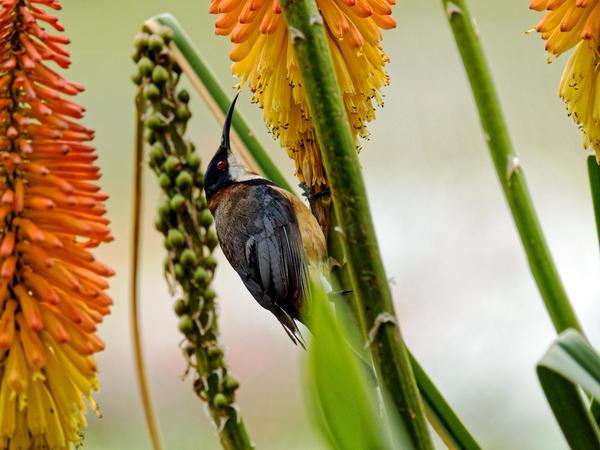 Honeyeater-8.jpeg