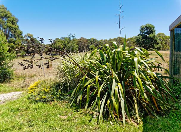 Giant-grass-2.jpeg