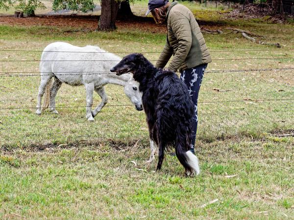 Leonid-and-miniature-horse-4.jpeg
