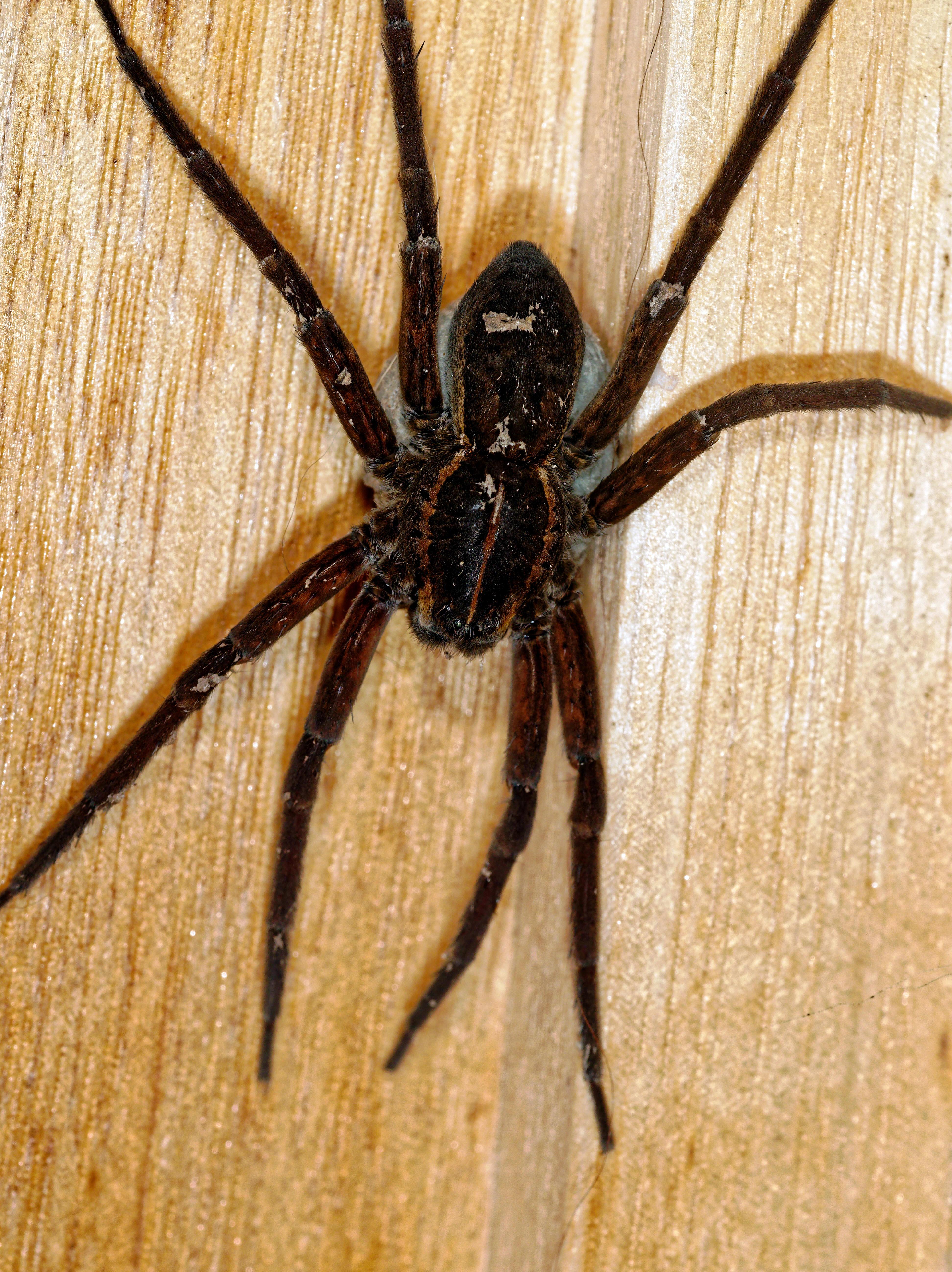 Spider-10.jpeg