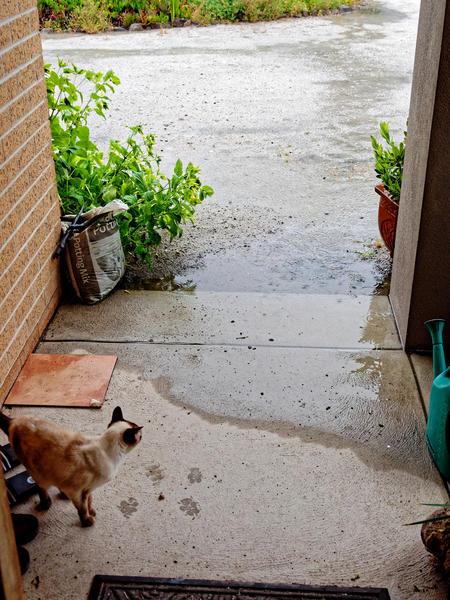 Rain-8.jpeg