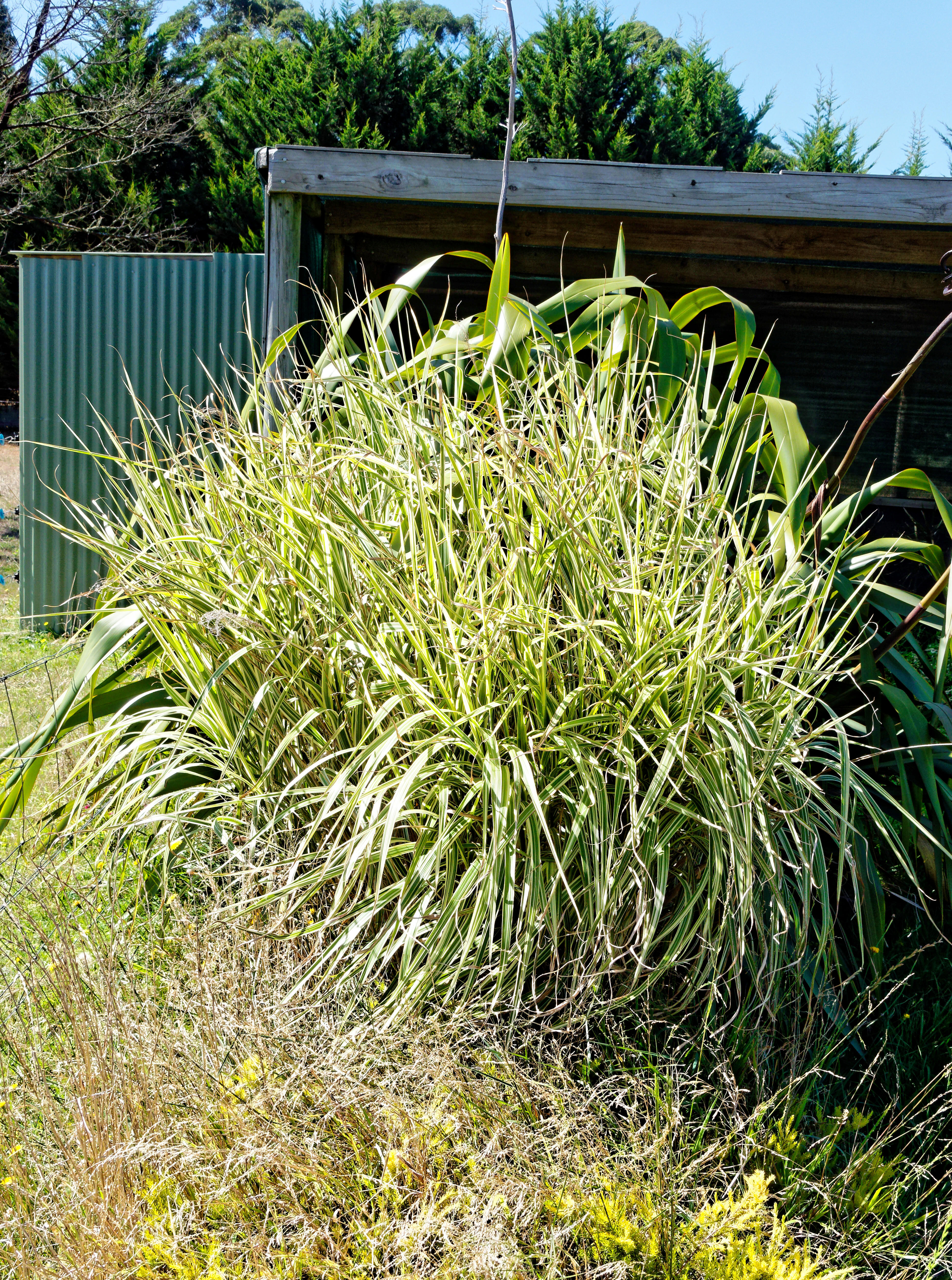 Grass-1.jpeg