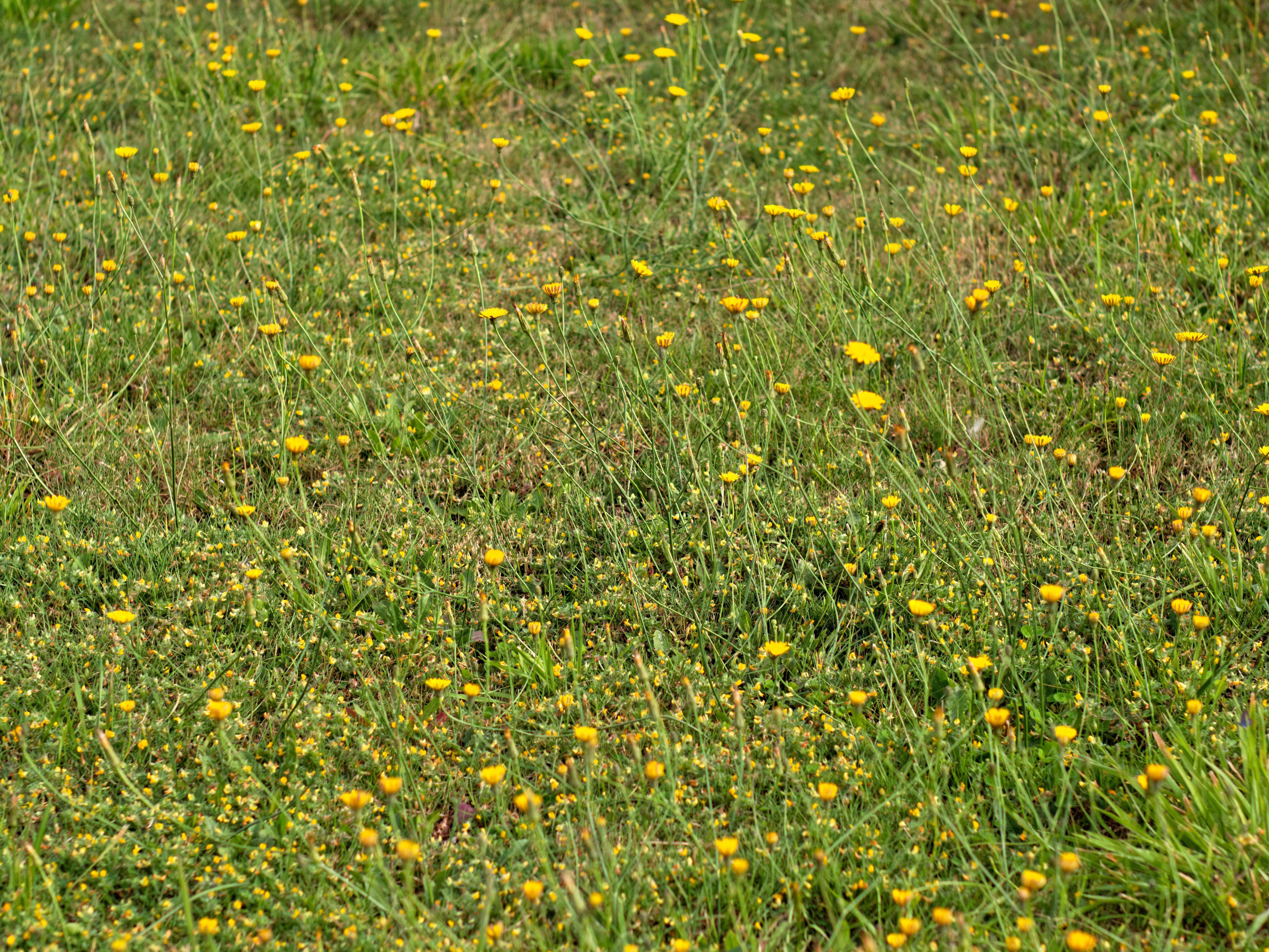 Lawn-2.jpeg