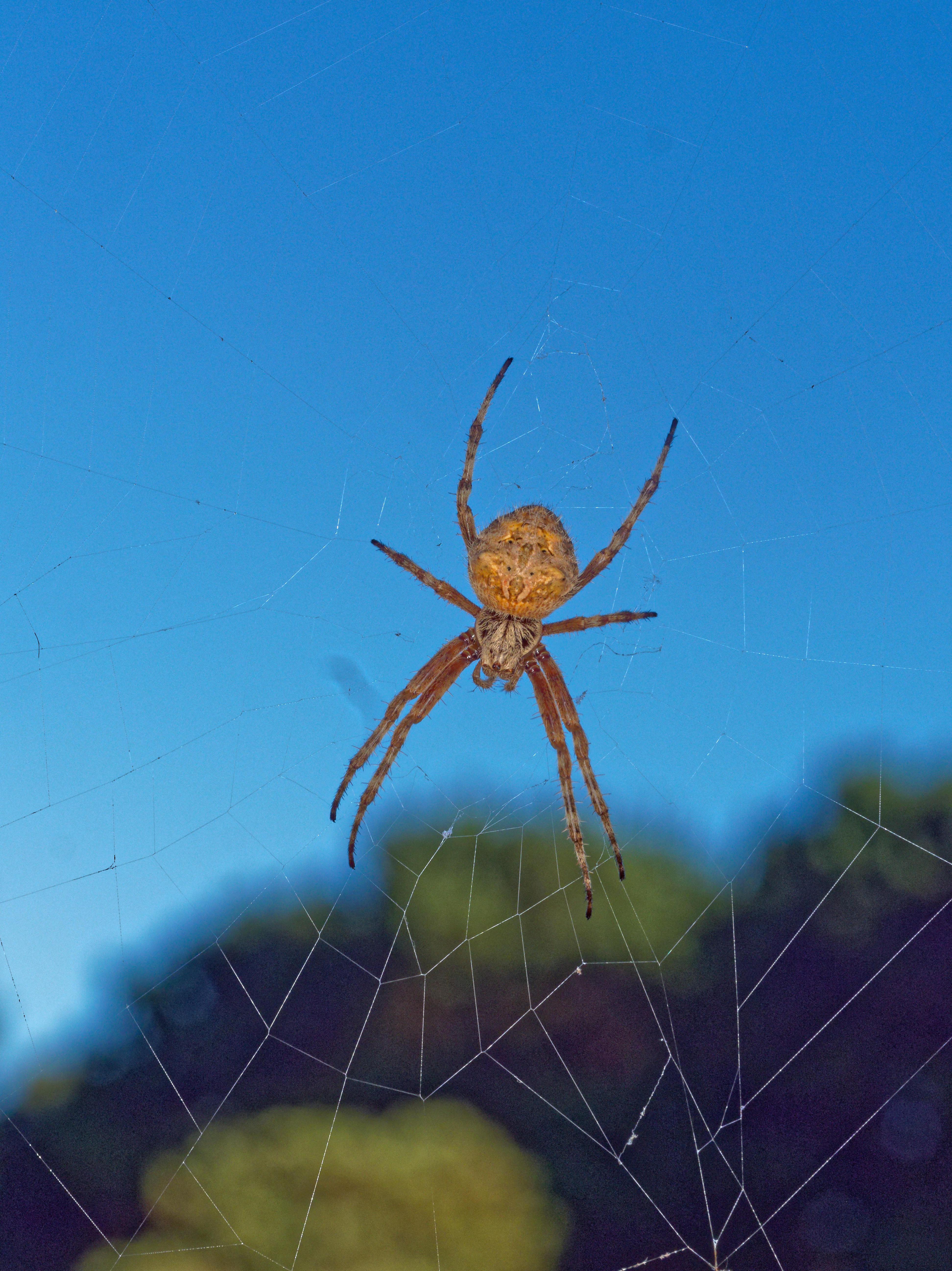 Spider-11.jpeg