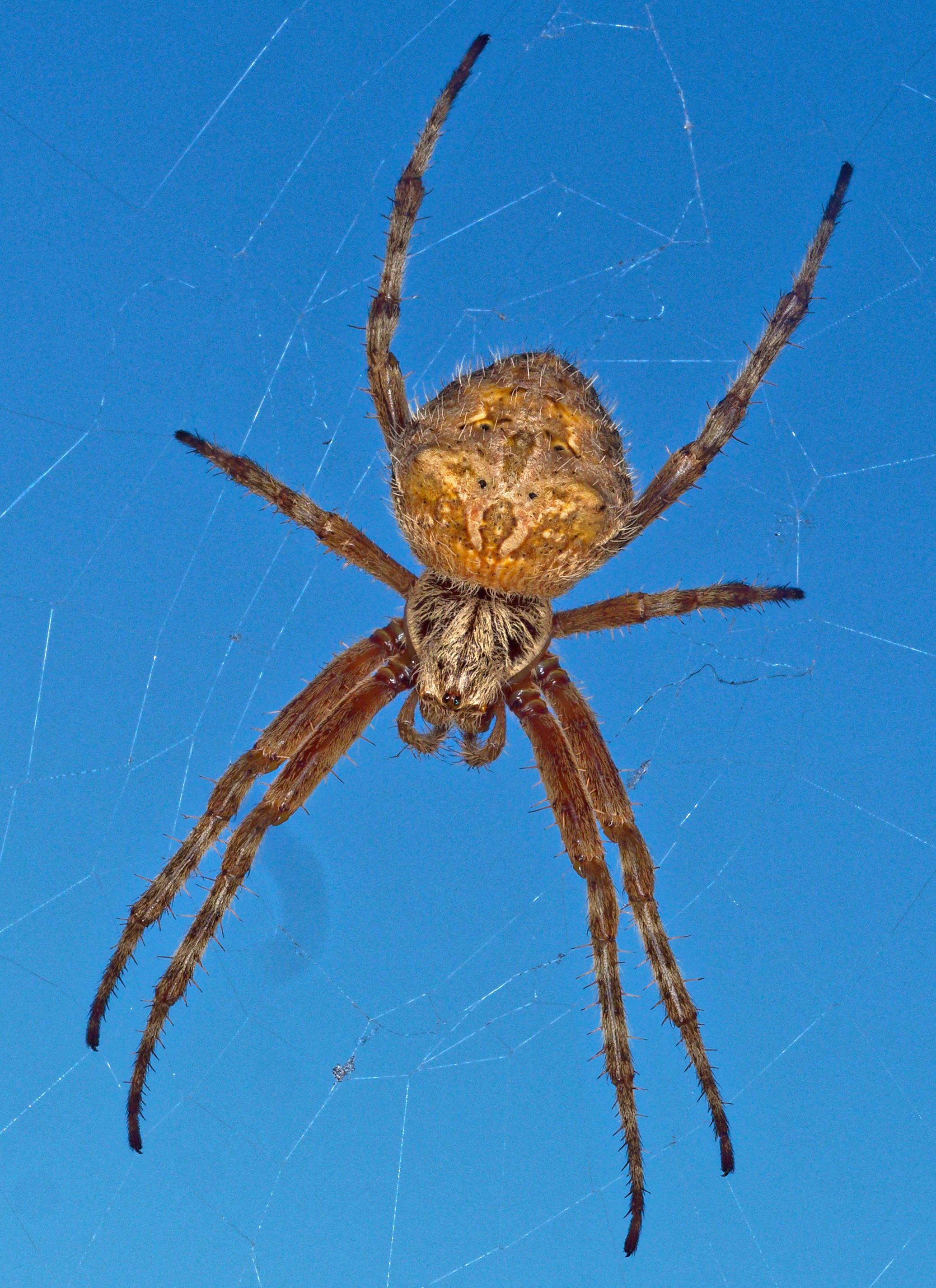 Spider-12.jpeg