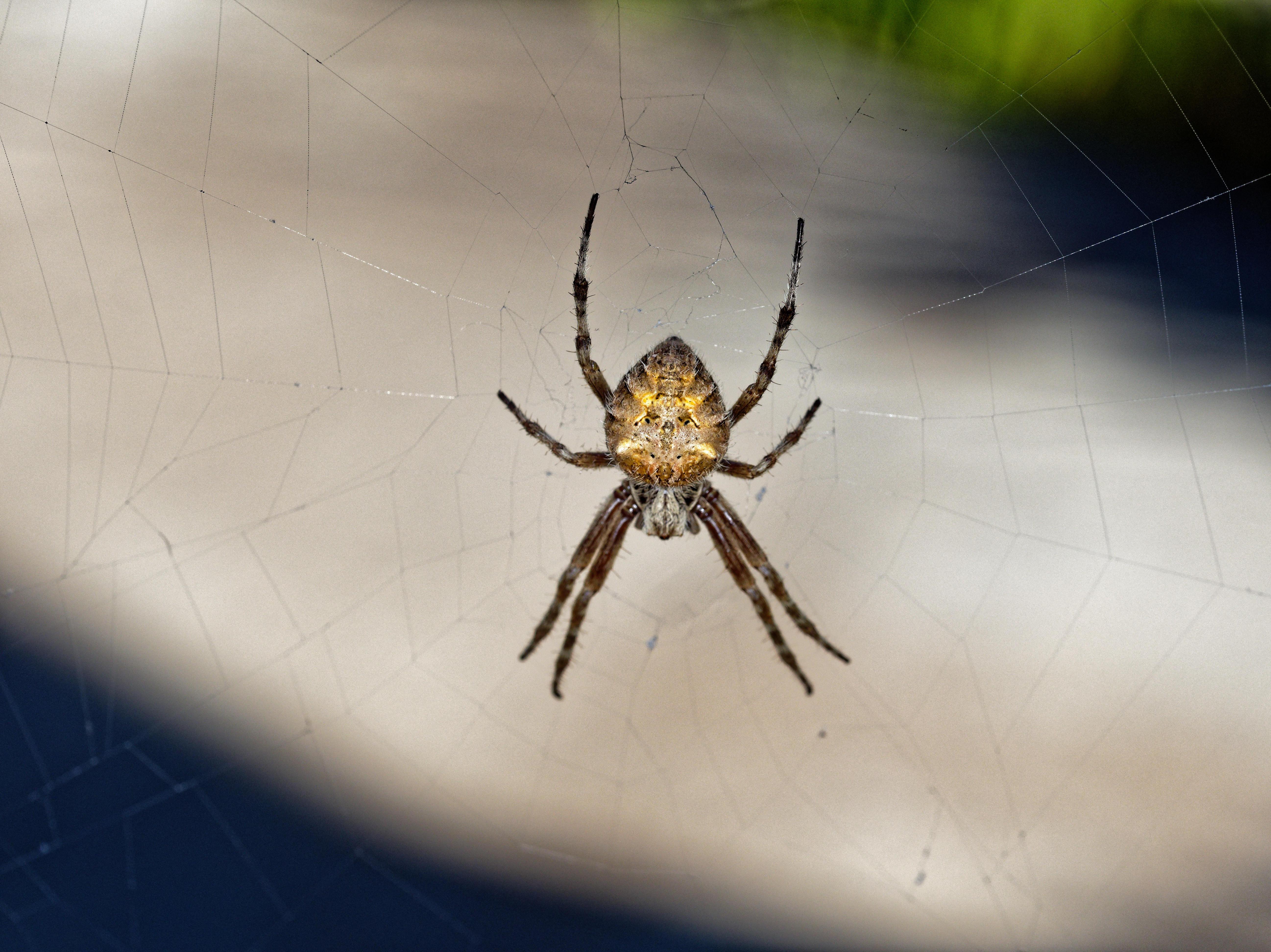 Spider-4.jpeg