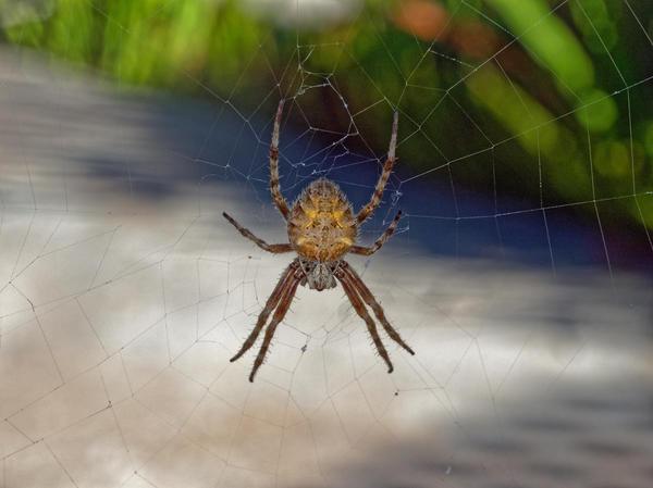 Spider-6.jpeg