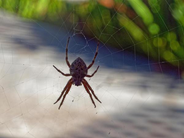 Spider-7.jpeg
