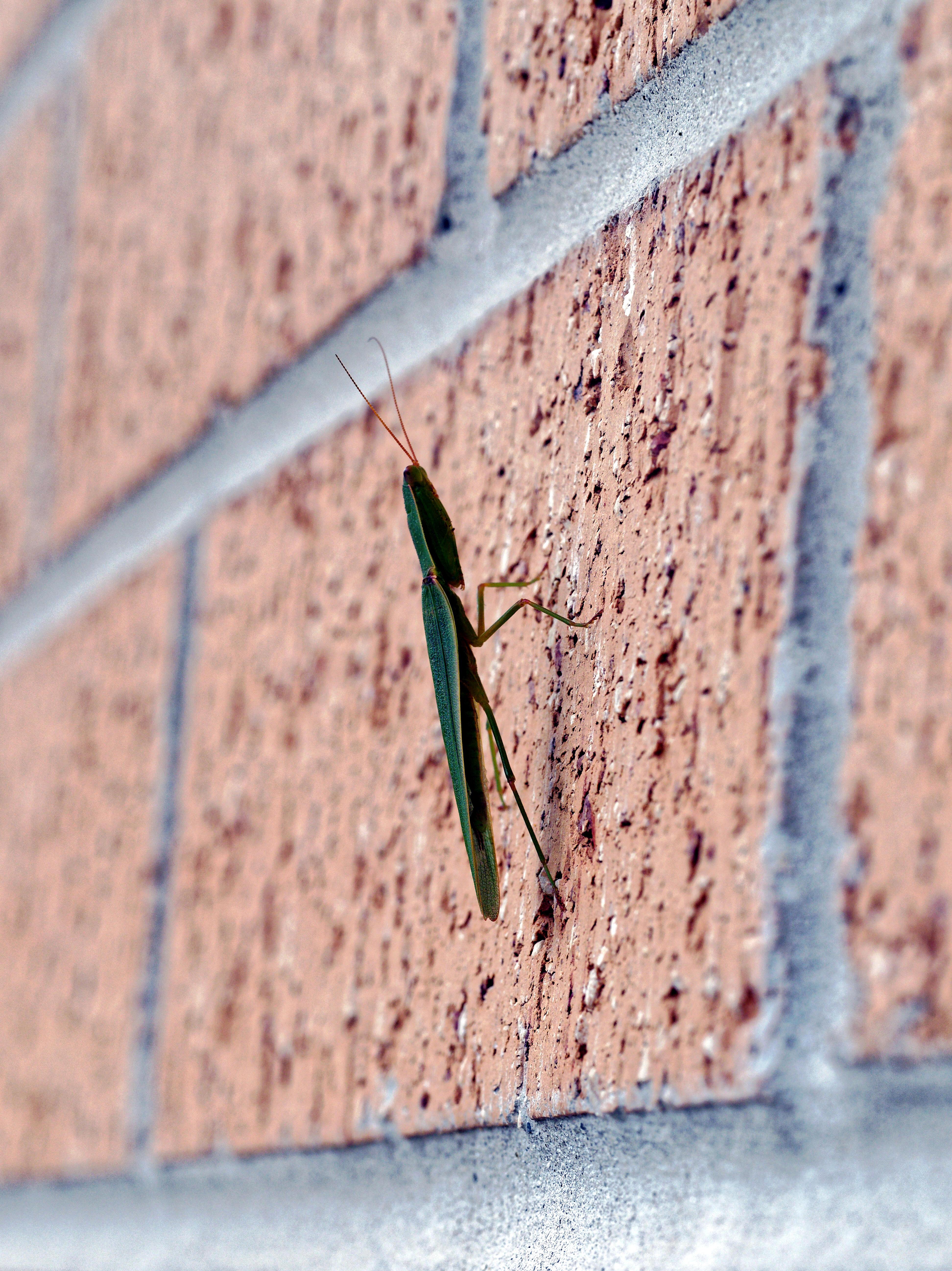 Grasshopper-3.jpeg