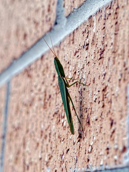 Grasshopper-4.jpeg