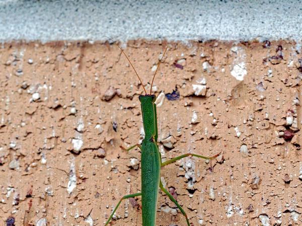 Grasshopper-5.jpeg