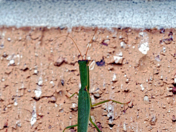Grasshopper-6.jpeg