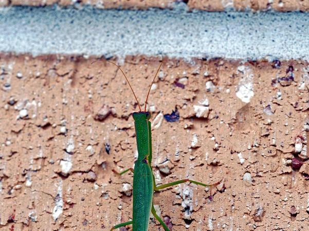 Grasshopper-7.jpeg
