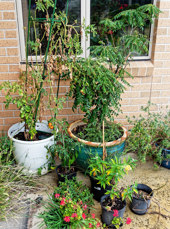 Pot-plants.jpeg