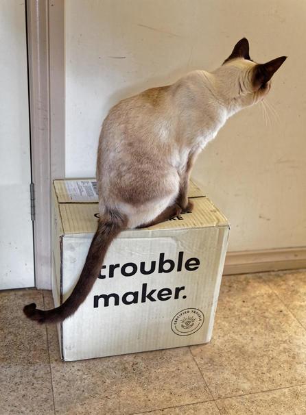Piccola-makes-trouble-1.jpeg