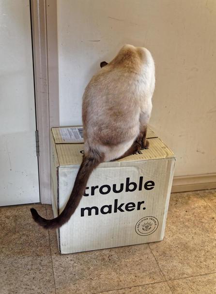 Piccola-makes-trouble-2.jpeg