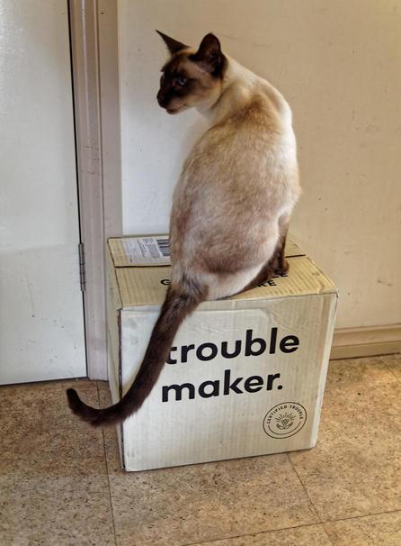 Piccola-makes-trouble-3.jpeg