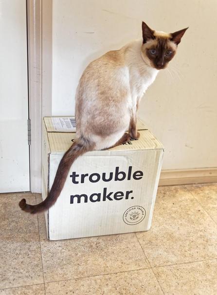Piccola-makes-trouble-4.jpeg