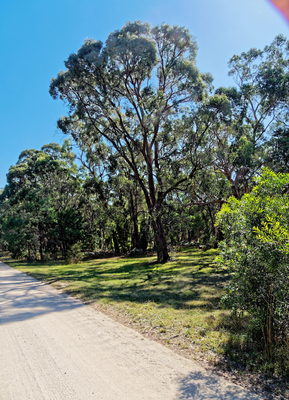 Park-landscape-2.jpeg