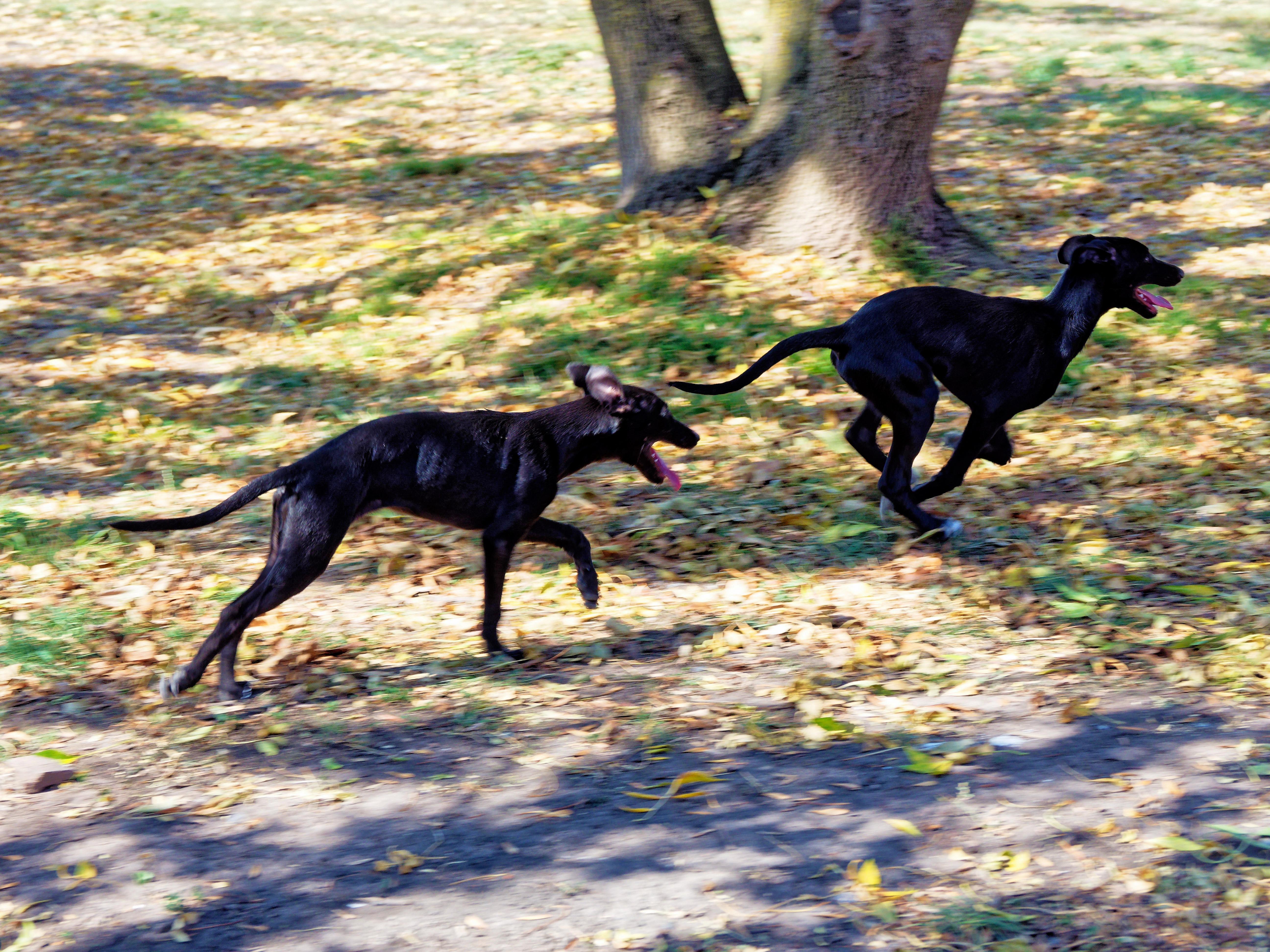 Dogs-2.jpeg