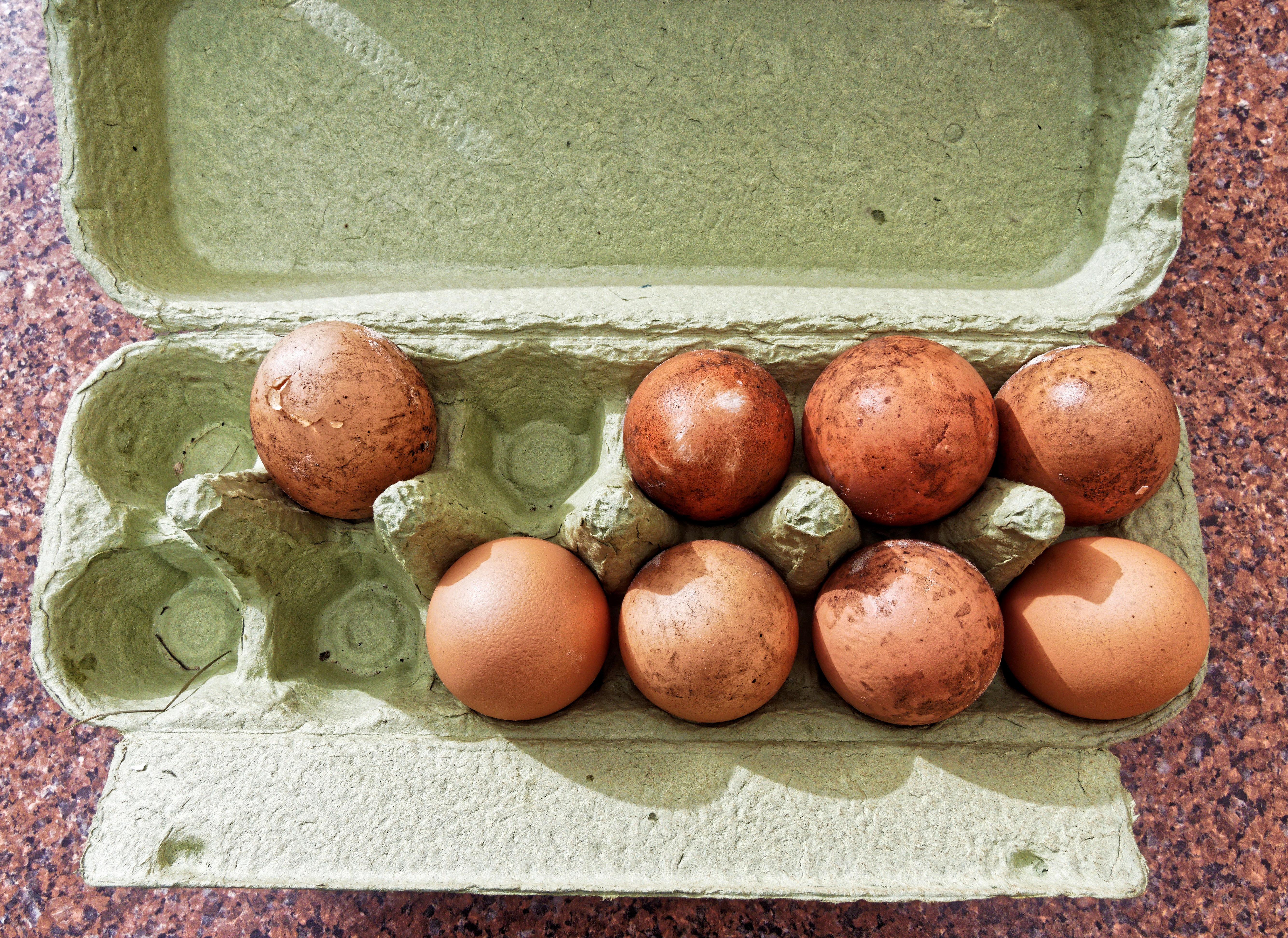 Eggs-1.jpeg