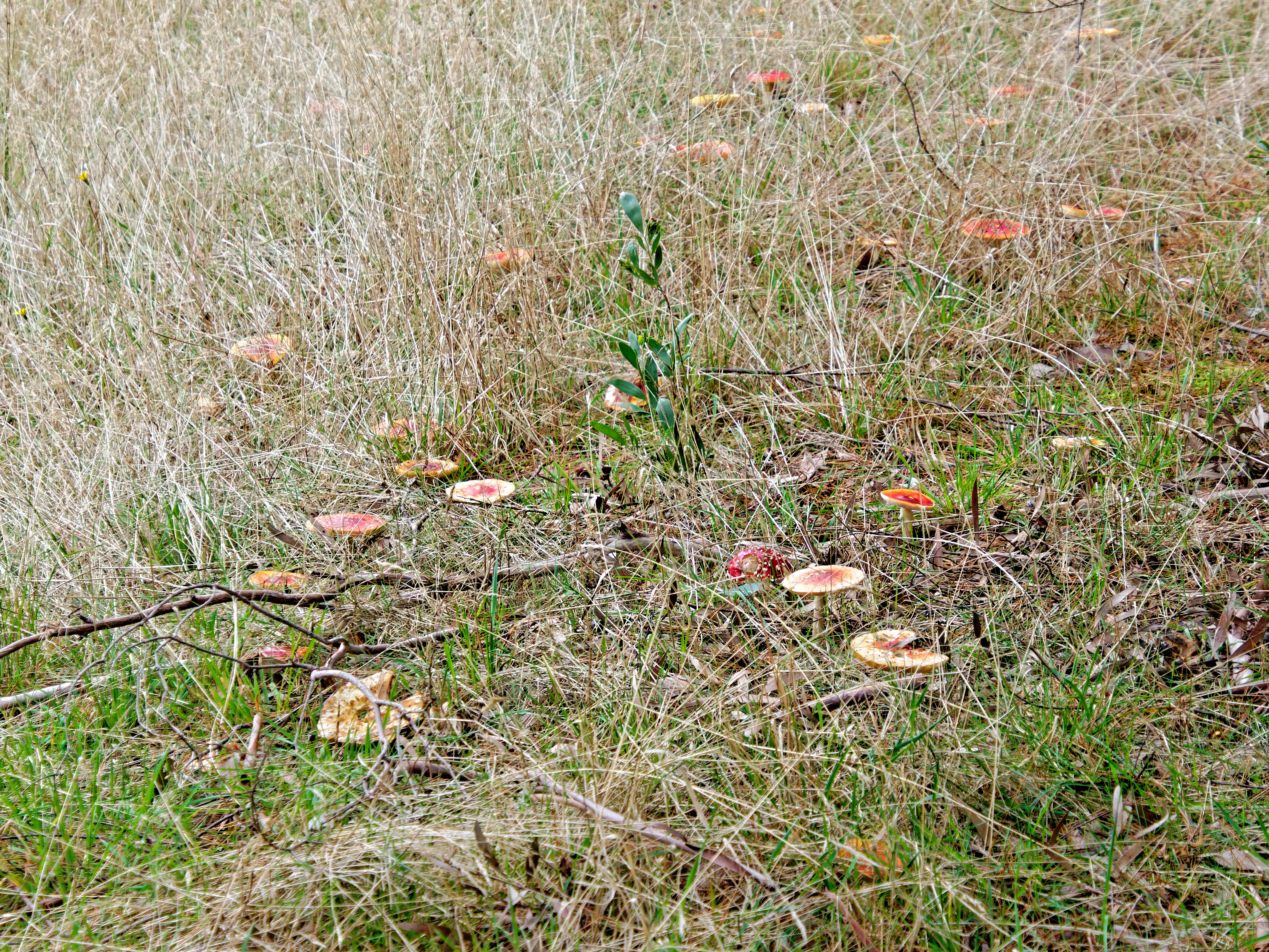 This should be Amanita-muscaria-3.jpeg.  Is it missing?