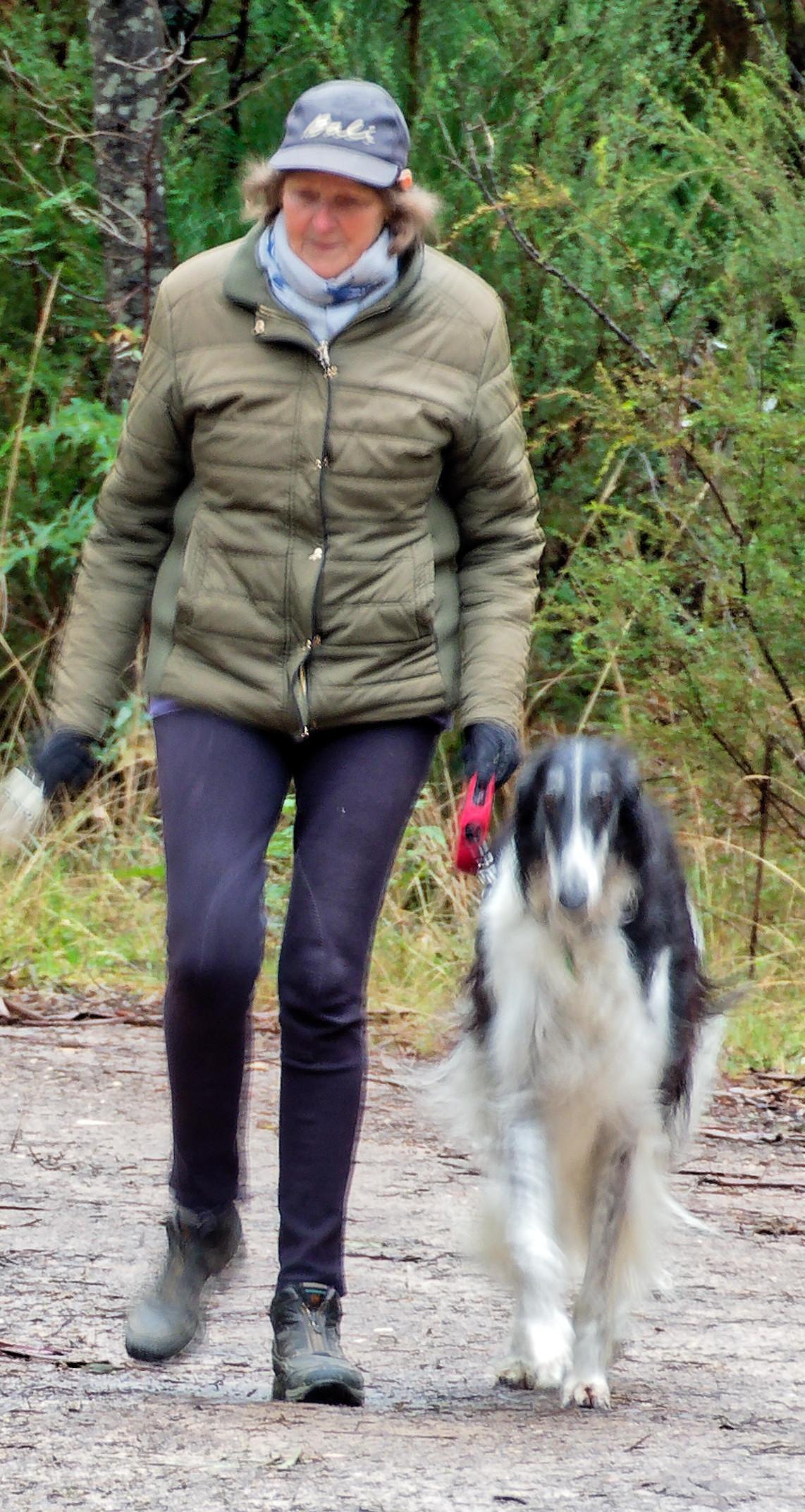 Walking-dogs-4-detail.jpeg