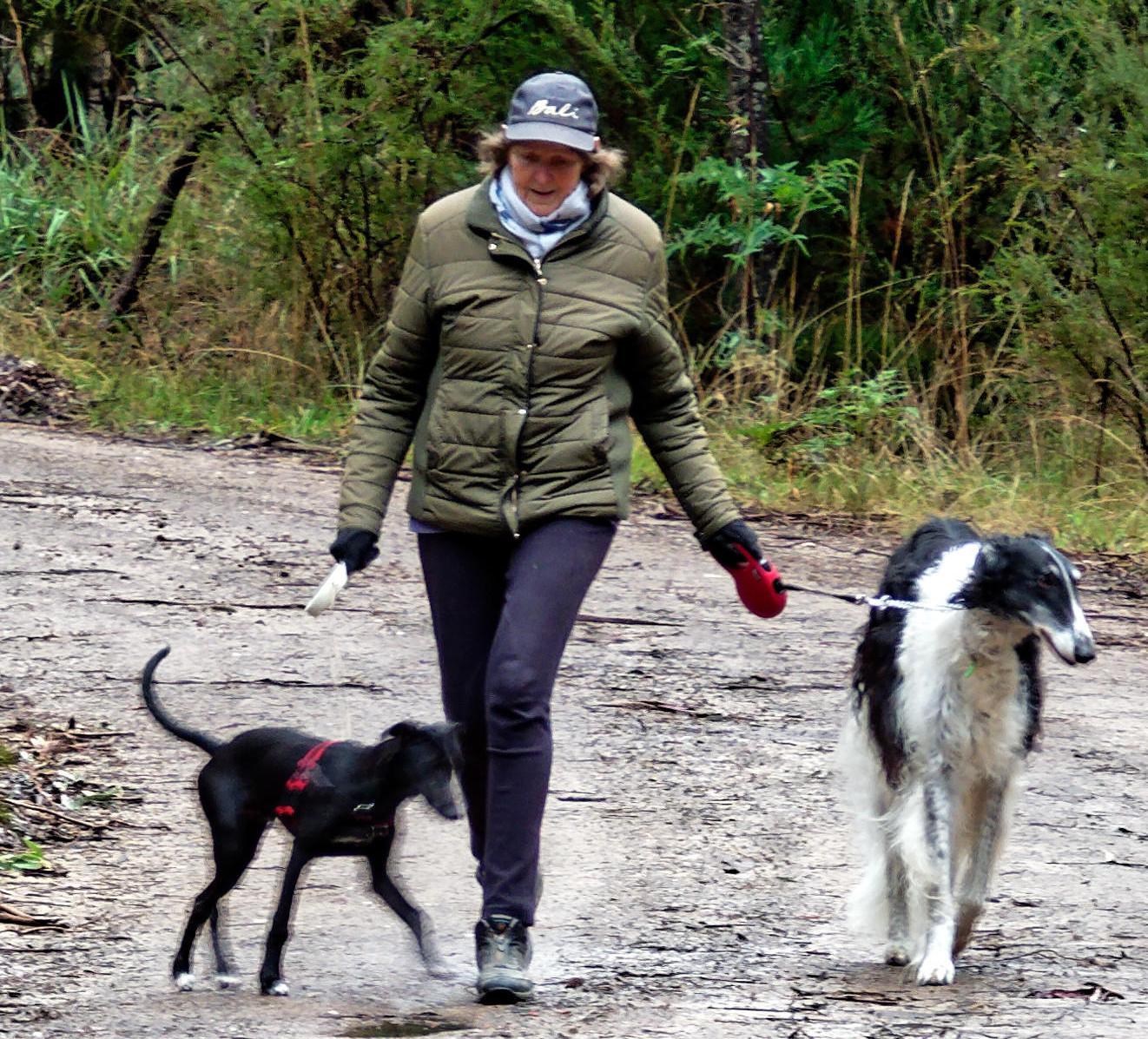 Walking-dogs-6-detail.jpeg