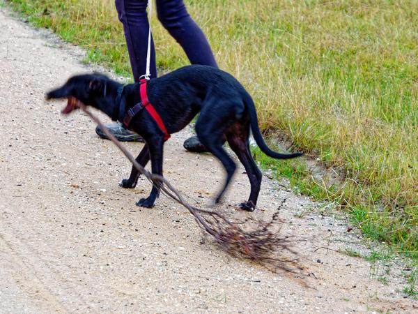 Walking-dogs-10.jpeg