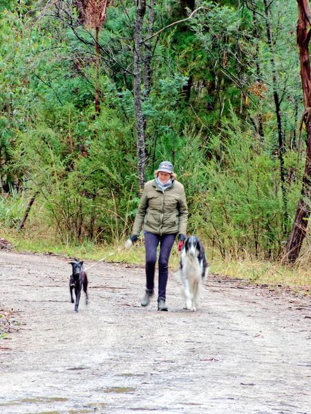 Walking-dogs-4.jpeg