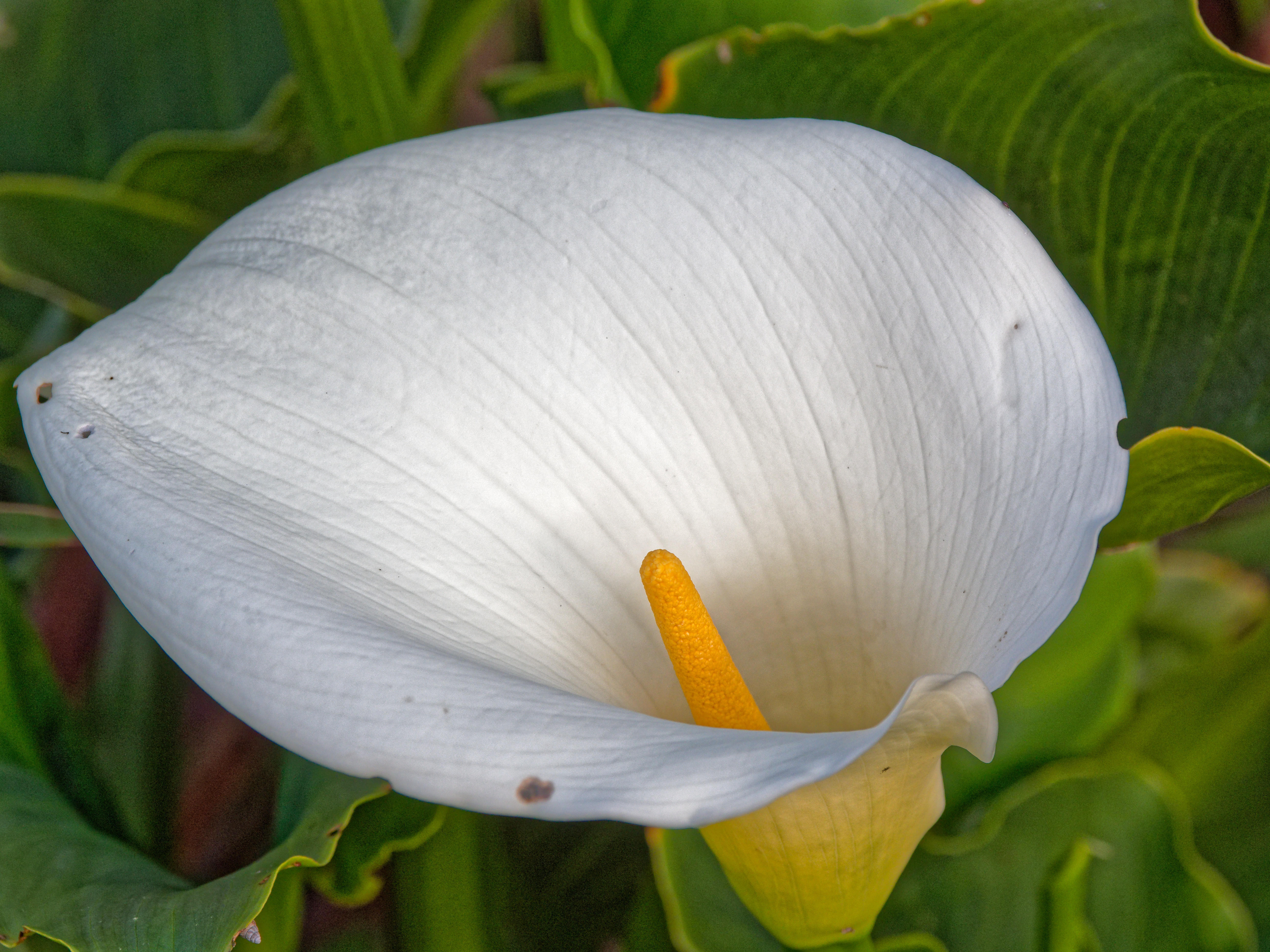 This should be Arum.jpeg.  Is it missing?