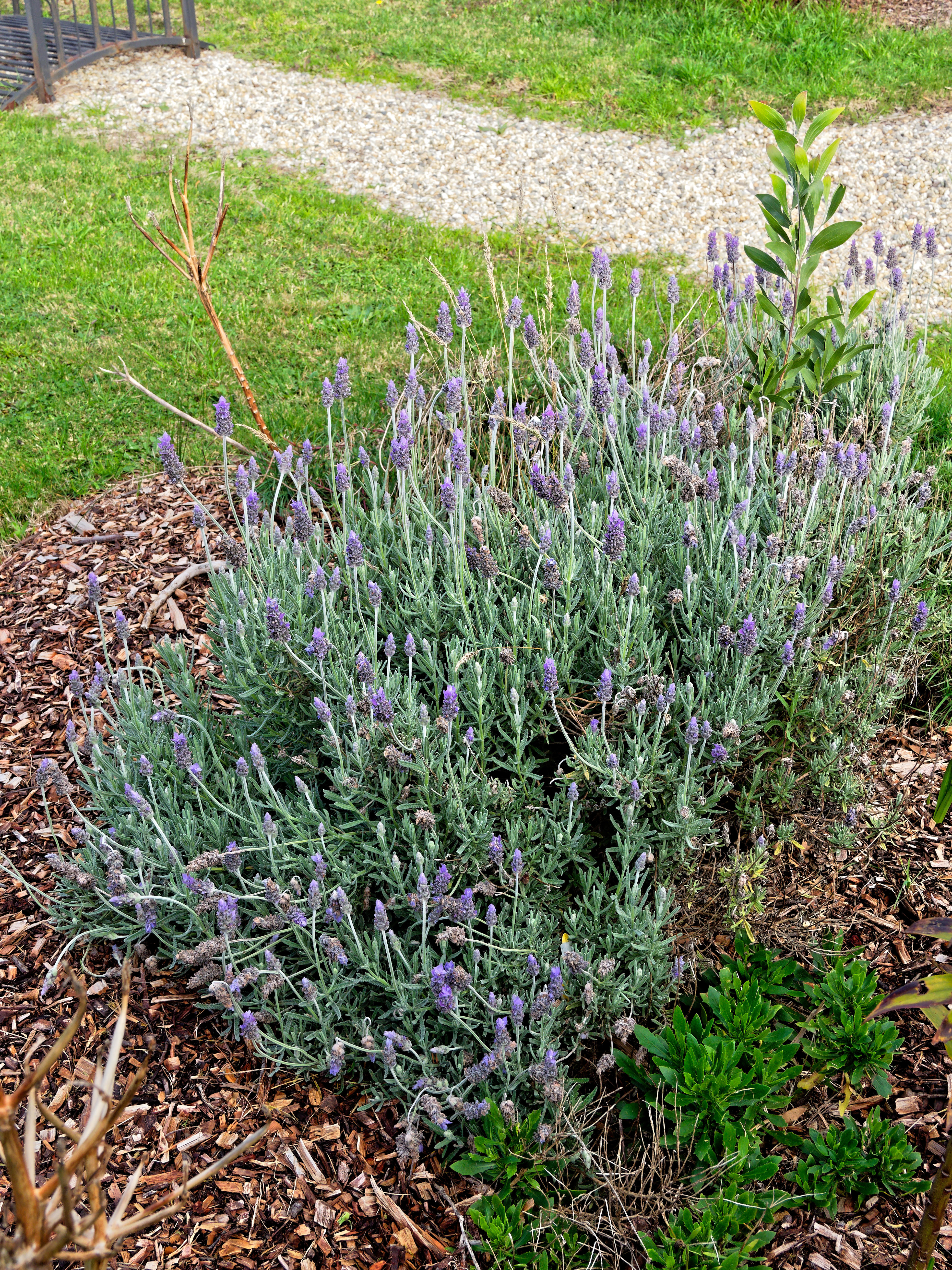 This should be Lavender-1.jpeg.  Is it missing?