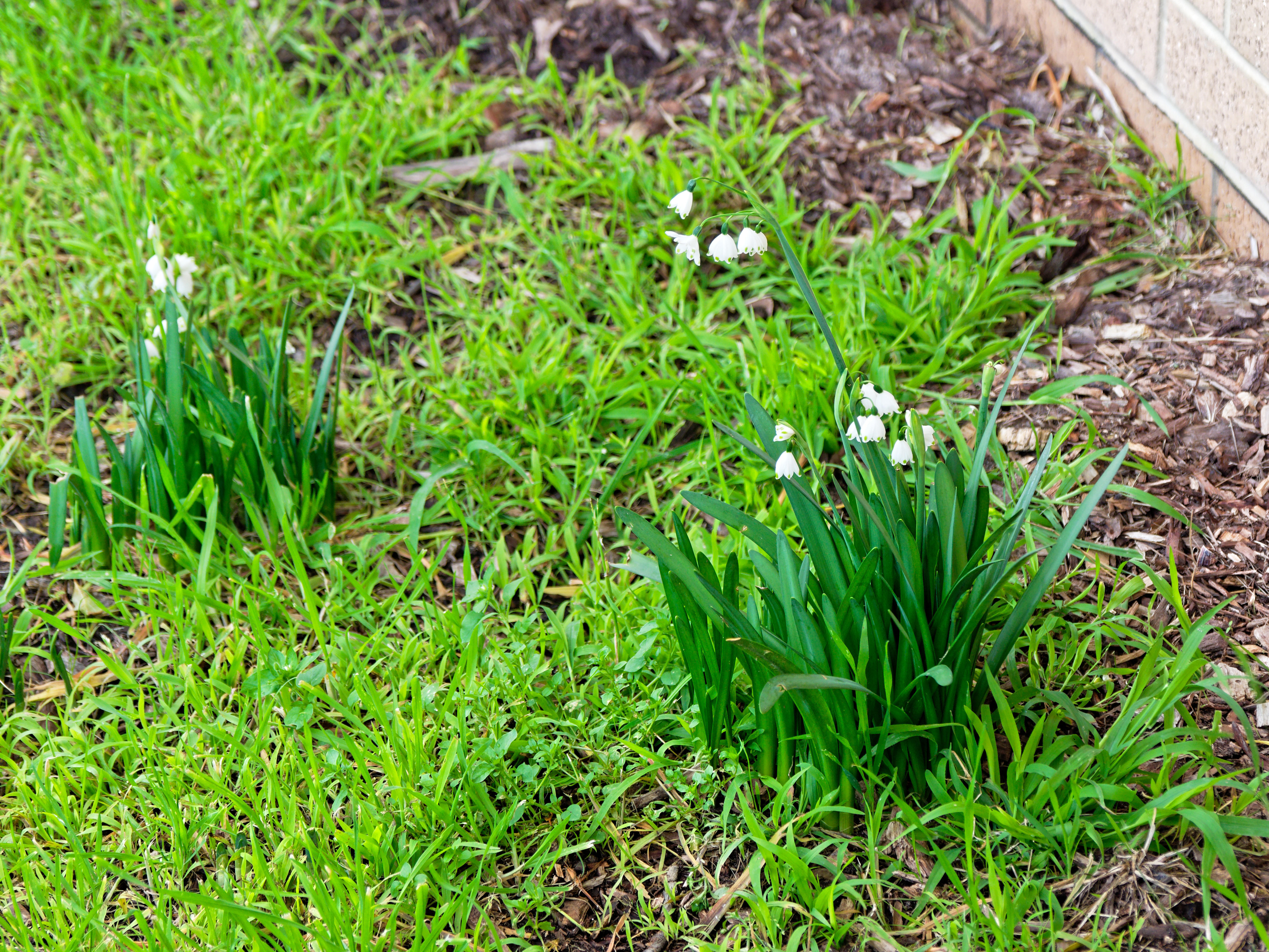This should be Snowdrops.jpeg.  Is it missing?