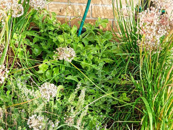Herb-garden.jpeg