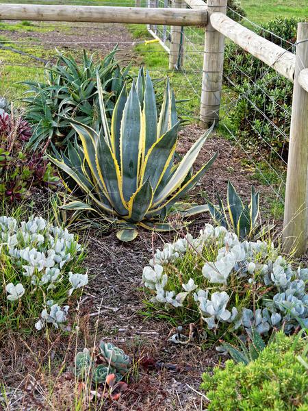 Succulents-2.jpeg
