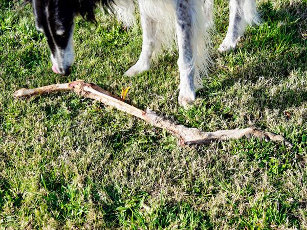 Nikolai-and-kangaroo-bone-13.jpeg