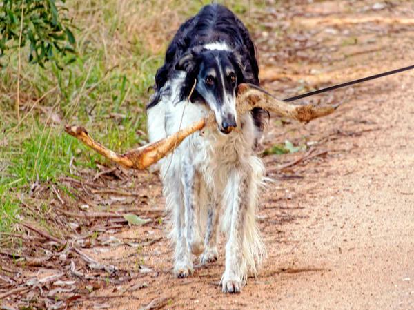 Nikolai-and-kangaroo-bone-4.jpeg