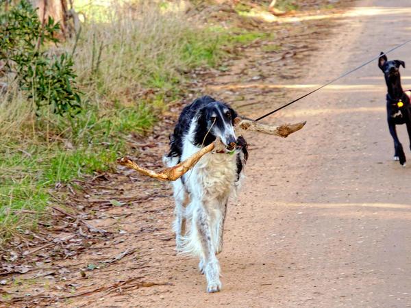 Nikolai-and-kangaroo-bone-5.jpeg