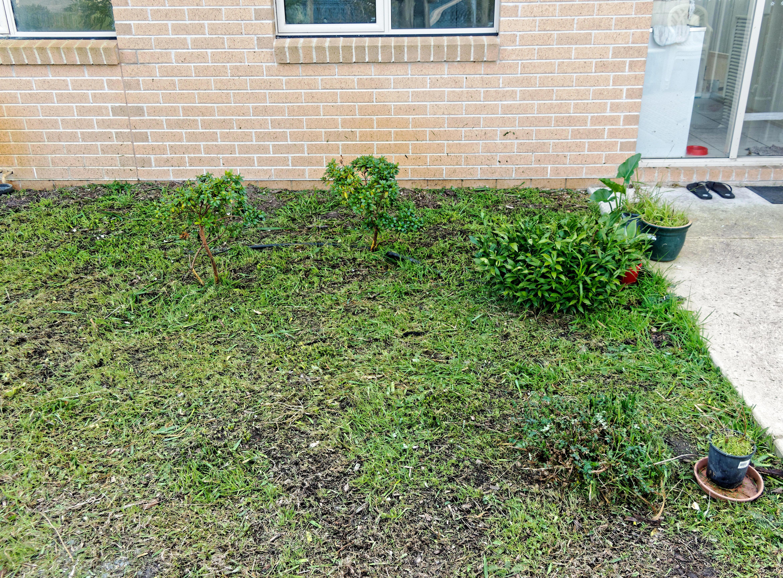 Destroyed-garden-bed-1.jpeg