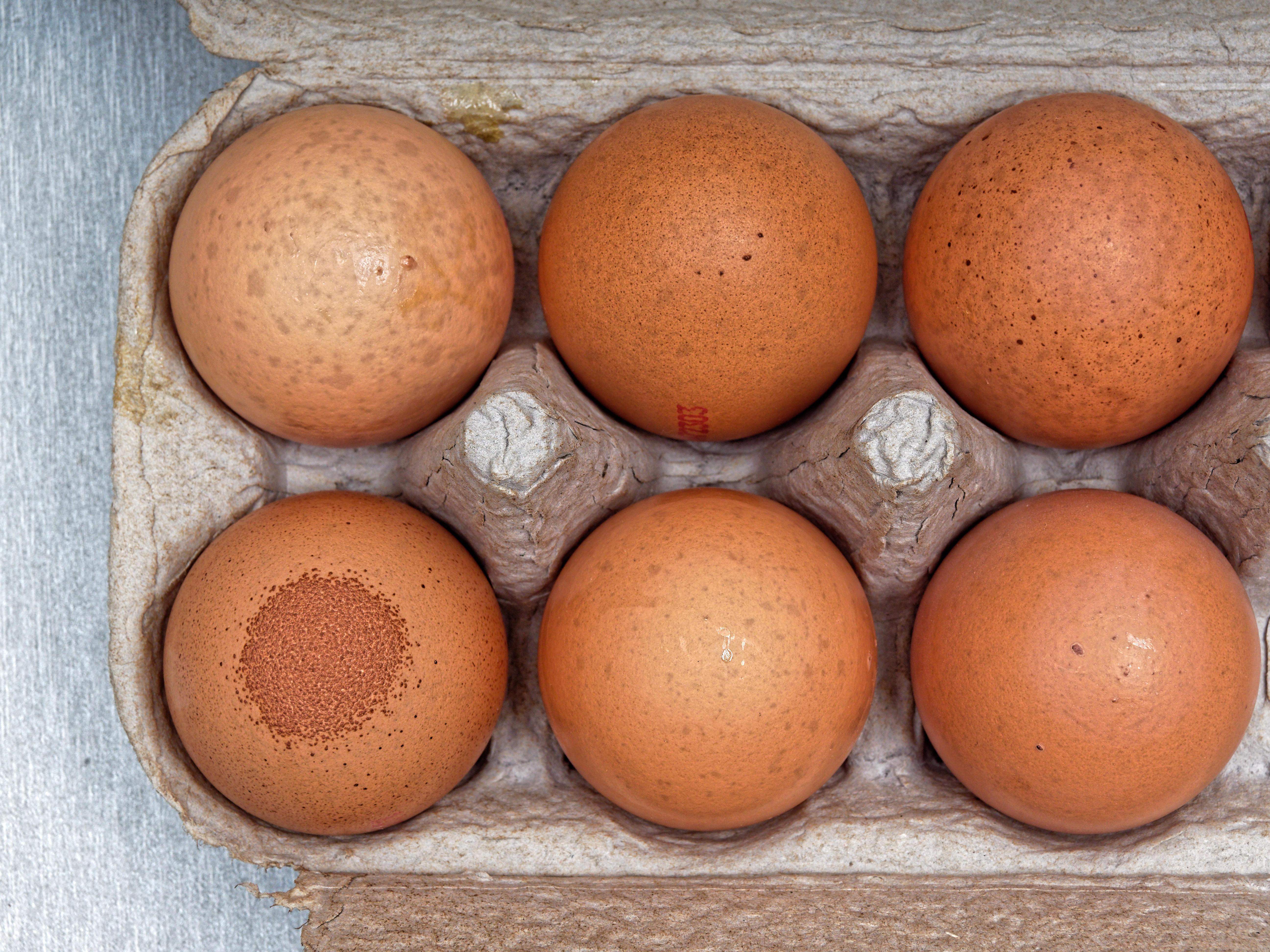 Speckled-egg-2.jpeg