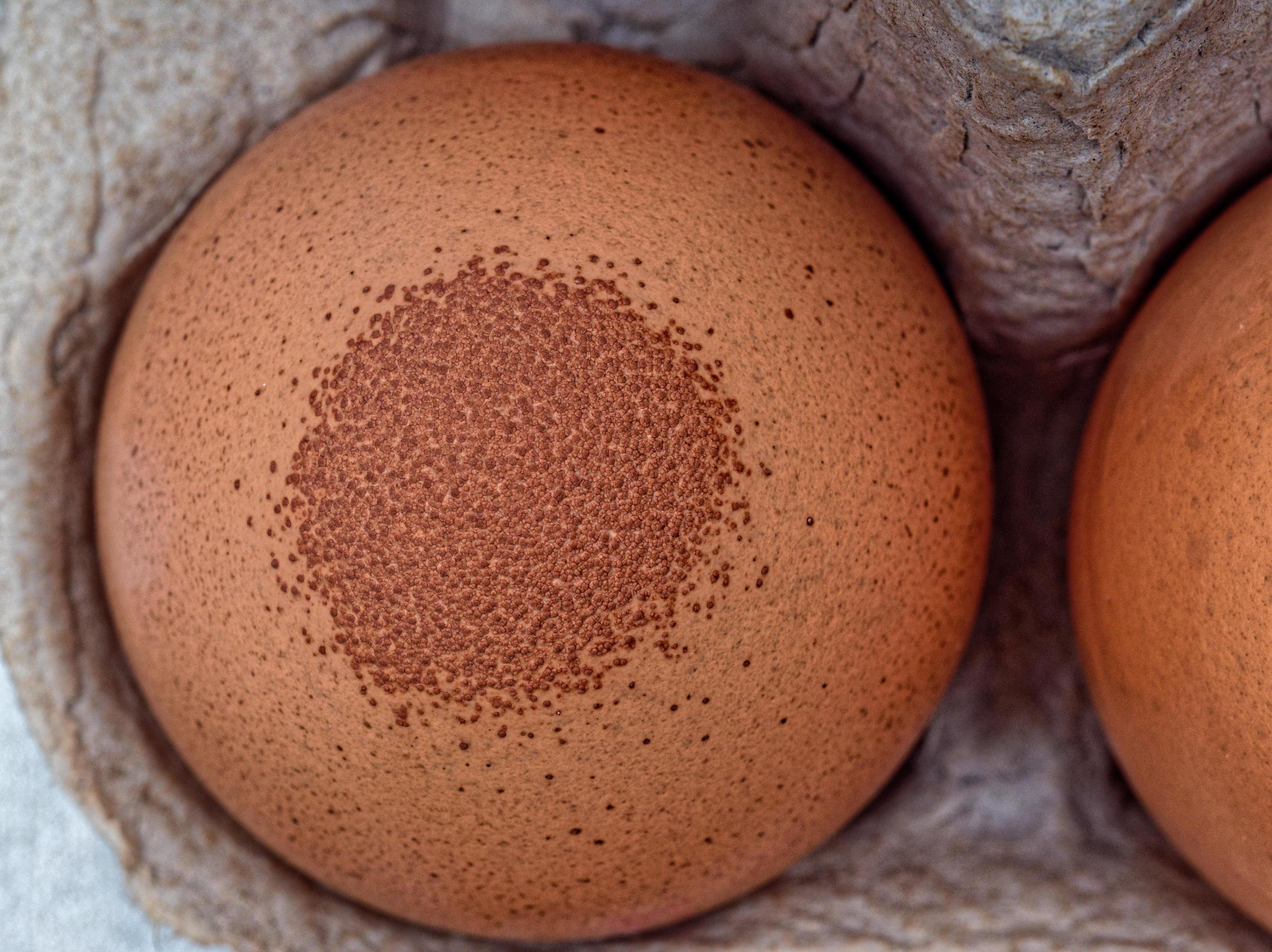 Speckled-egg-3.jpeg