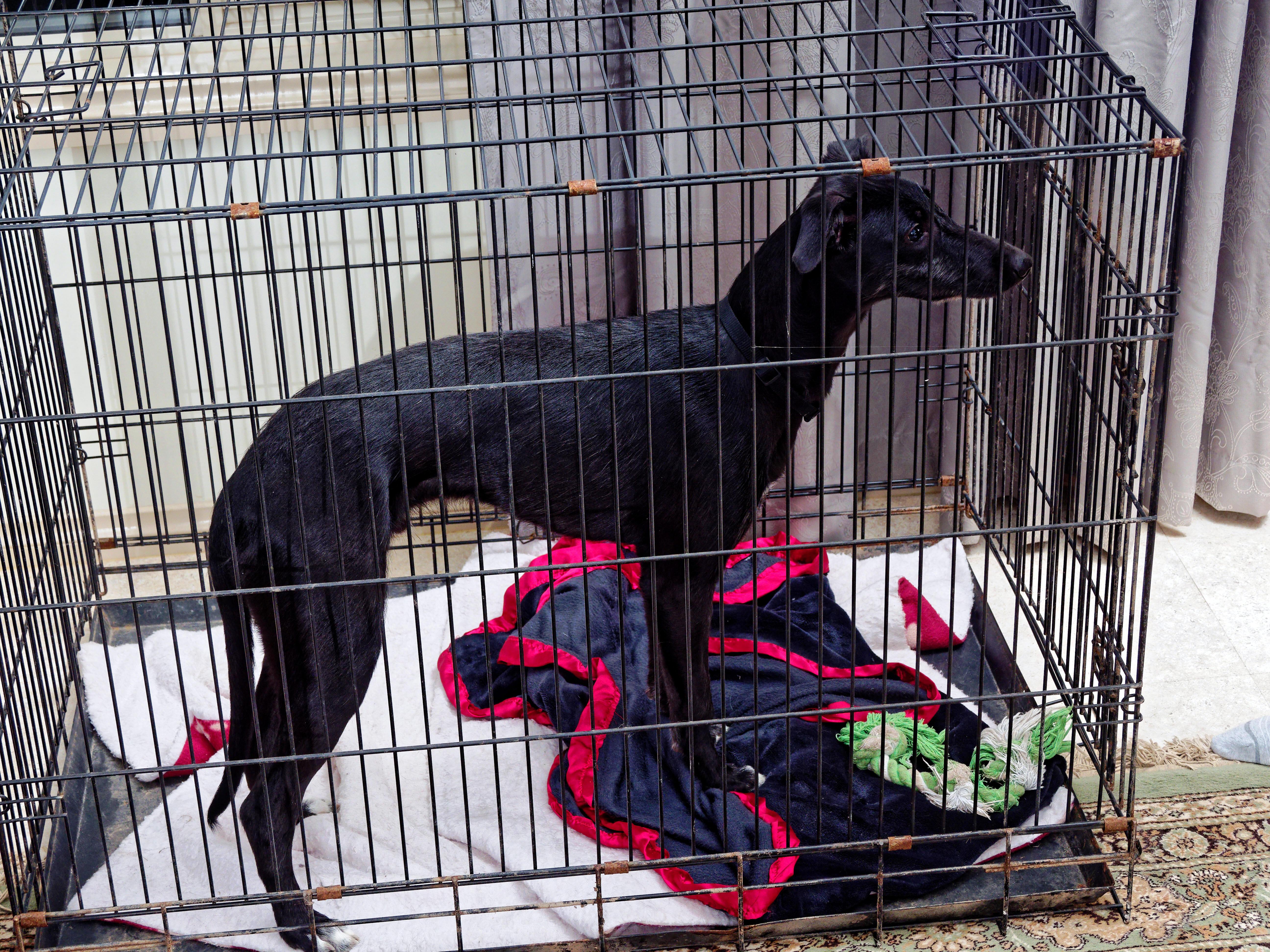 Dog-cage-4.jpeg