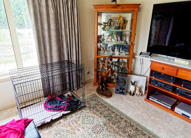 Dog-cage-1.jpeg
